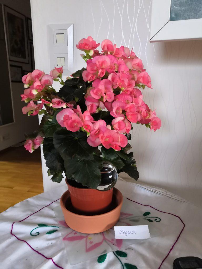 Begoña floreando